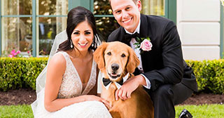 dogs at weddings dog handling service for weddings in portugal