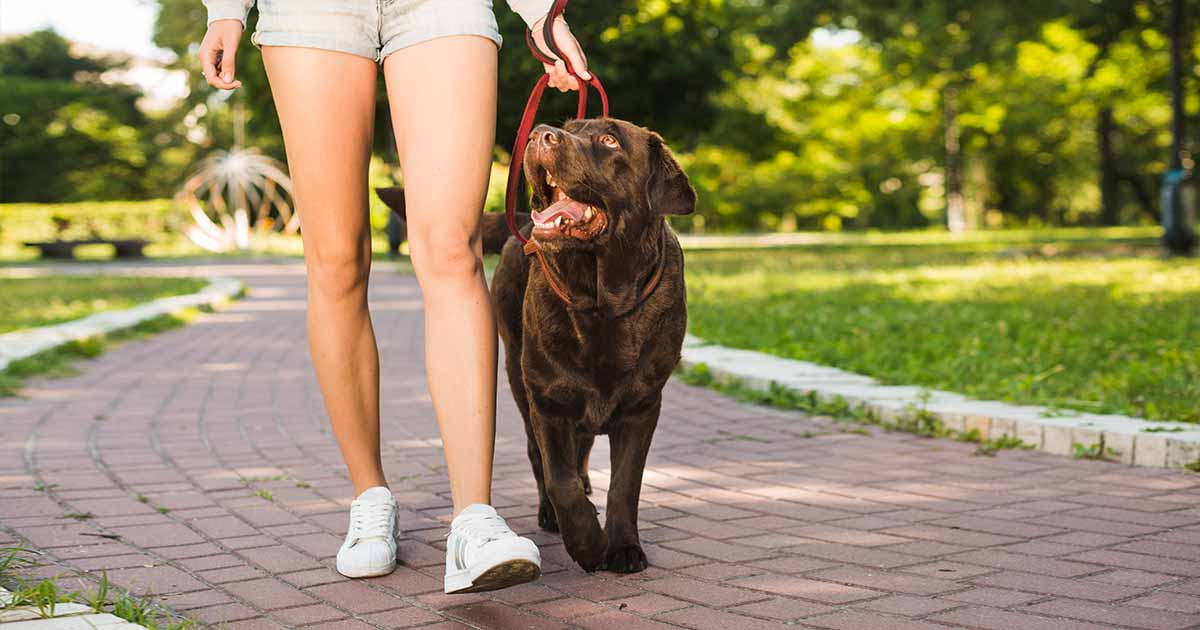 The perfect dog walk. Tips on how to design the best dog walk.