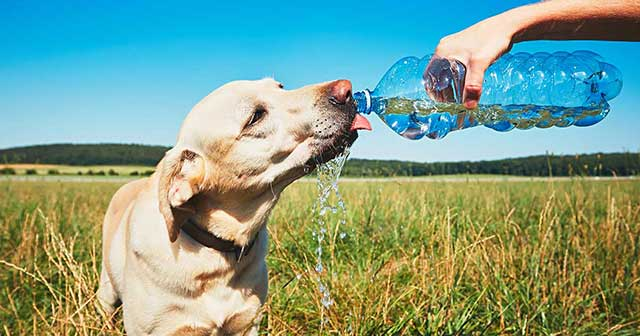 dog drinking from bottle