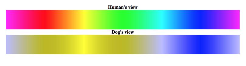 Dog vision v.s. human vision comparison