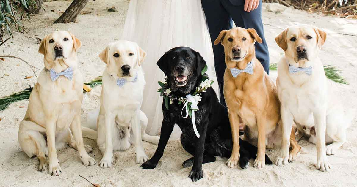 Dogs at weddings in the Algarve