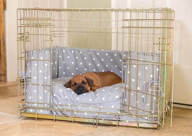 puppy sleeping in dog crate
