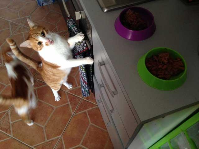 cat home visits in sagres pet sitting algarve