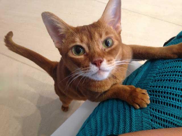 cat sitting service in lagos pet sitting algarve