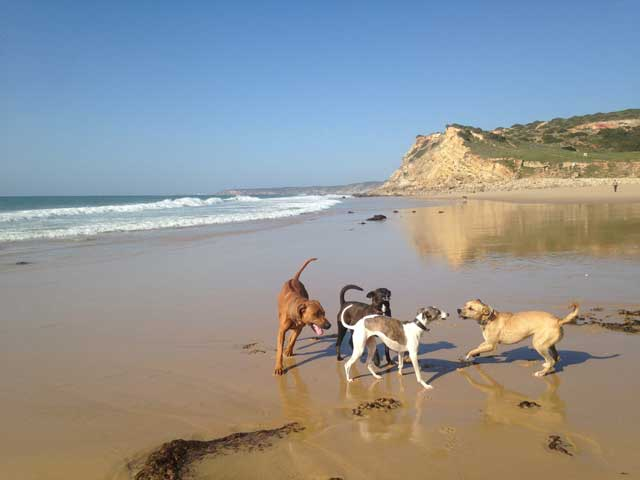 dog walking at boca do rio