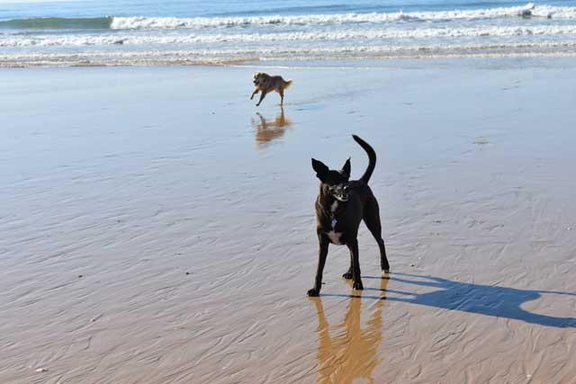 dogs at meia praia