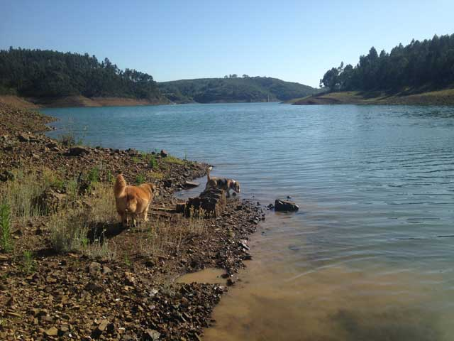 dogs swimming at barragem de bravura